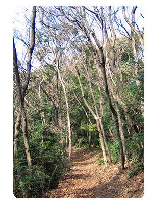 山道イメージ